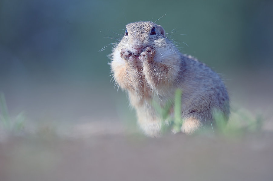 G_Squirrel_190822_0303.jpg
