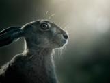 Hare_  21-07-19_005.jpg