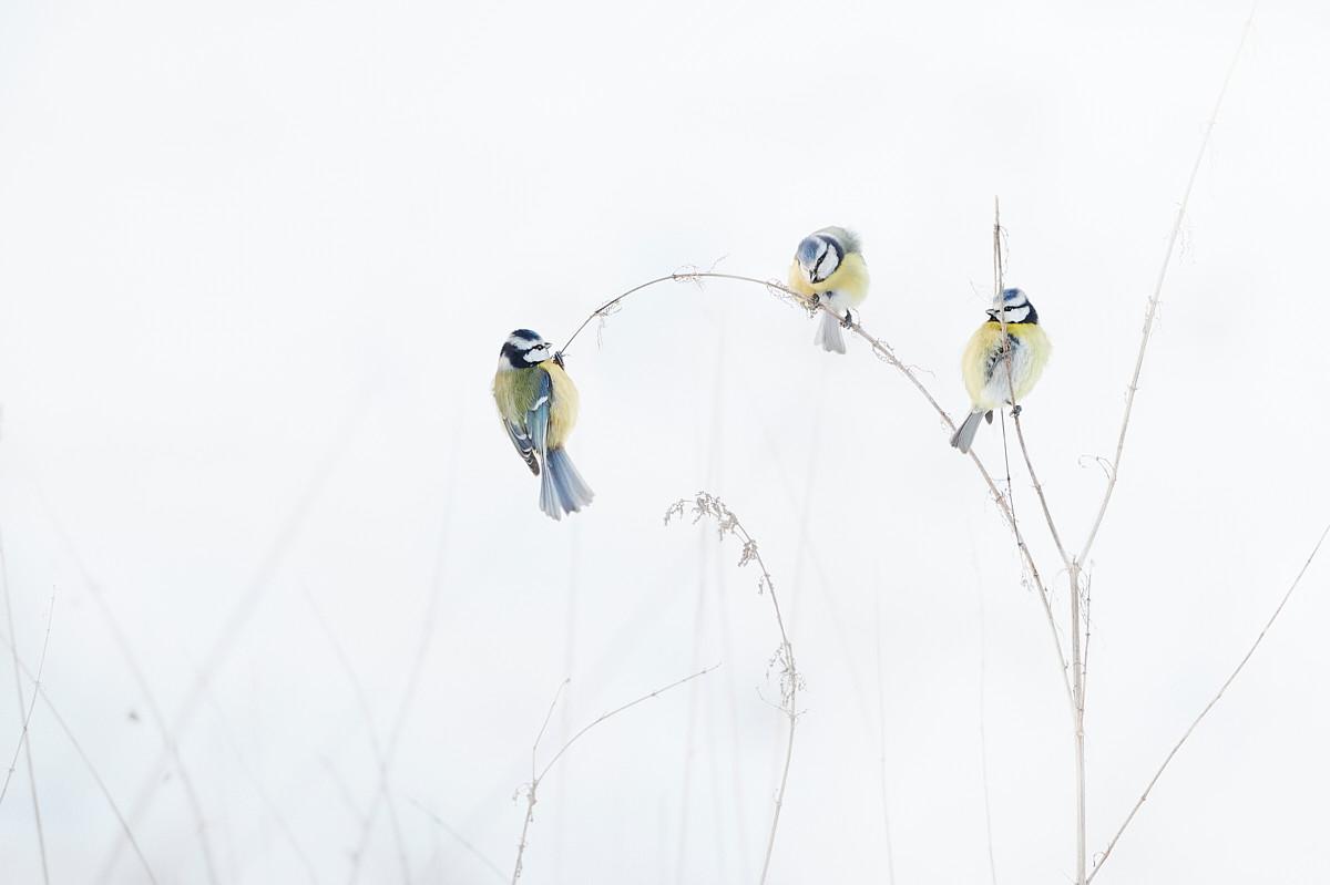 Three in Grass