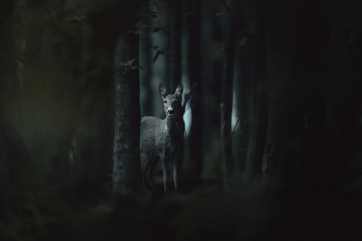 Eyes in dark woods