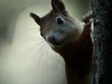 Squirrel_19-10-12_004.jpg