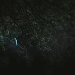 Ledňáček říční | Kingfisher (Alcedo atthis)