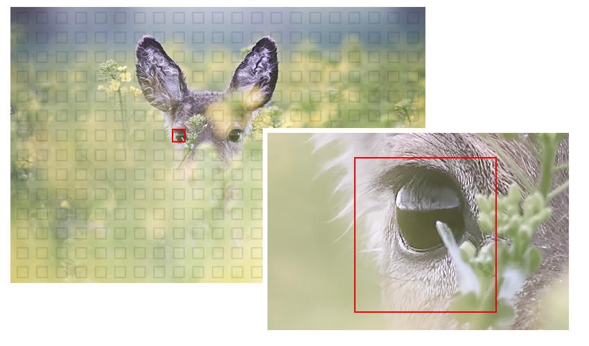 NikonZ6_Zoom.jpg