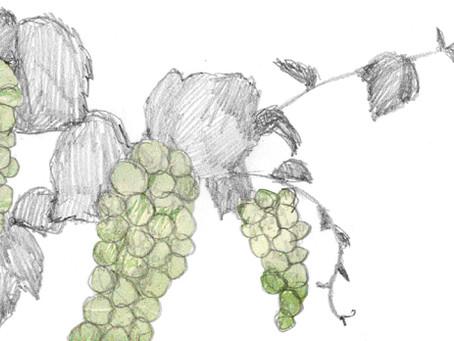 北海道産ワインの可能性とこれから