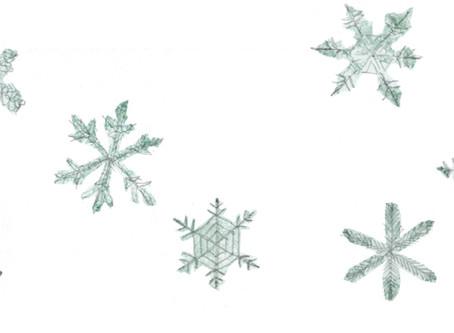 雪を愛でる