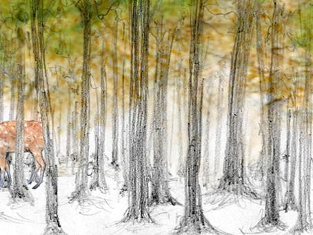 北海道の木の匂いと記憶について