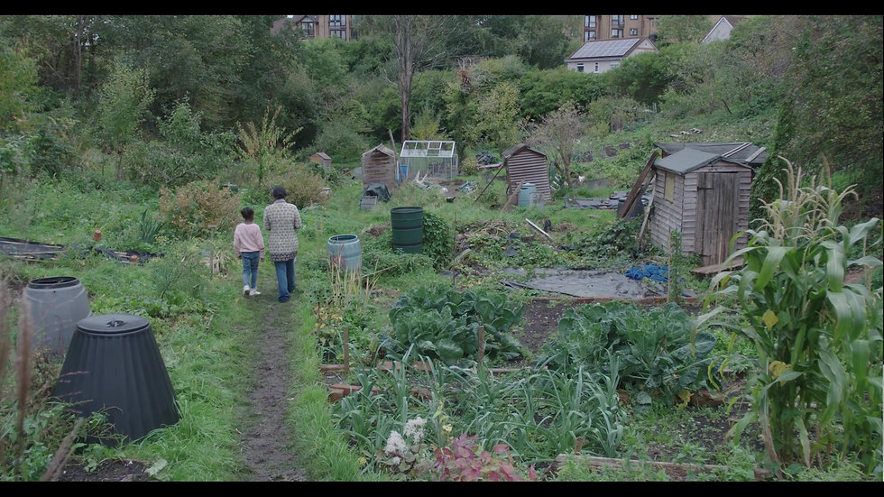Talia Allotment final.jpg