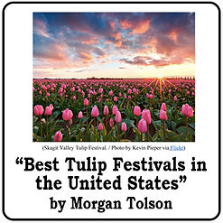 Best Tulip Festivals.jpg