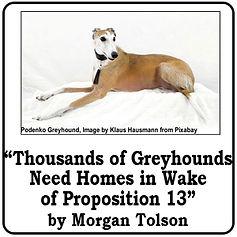 Thousands of Greyhounds.jpg