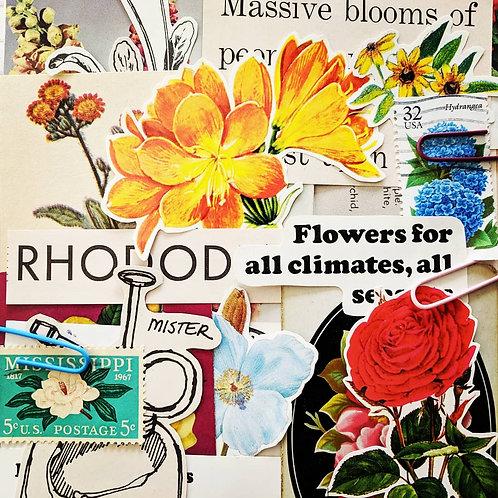 Floral Garden Paper Pack