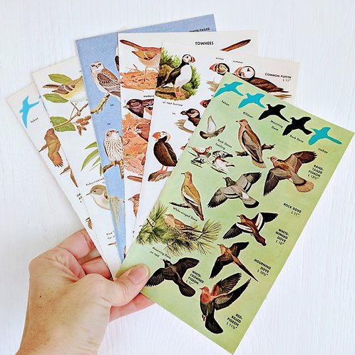 Vintage Bird Book Pages