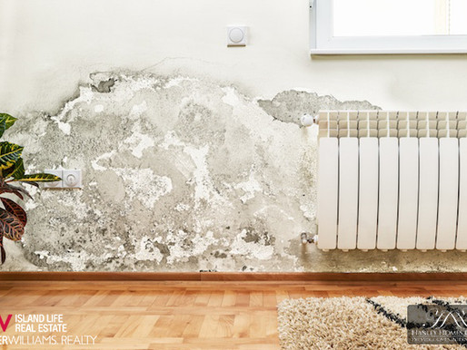 What Do I Need to Know About Mold