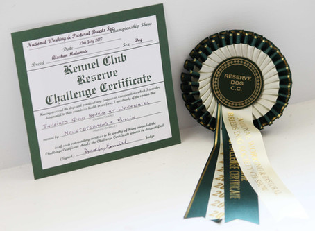 Henrik wins the RCC at National Working & Pastoral Ch show!