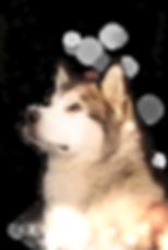 20190708134116_IMG_9248-cutout sparkle.p