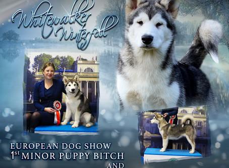 European Dog Show 2018 (Warsaw, Poland)