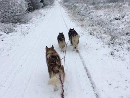 Snowy Training Run