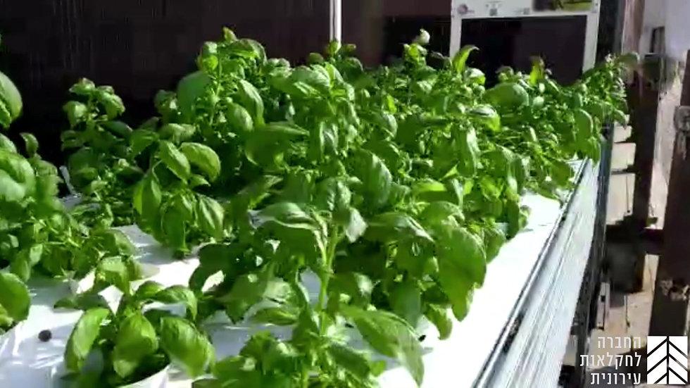 מערכת הידרופונית לגידול 53 צמחים- הזנה במים עמוקים - DWC