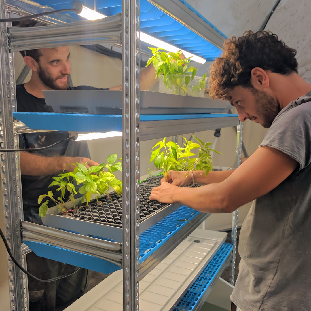 גידול ירקות בעיר