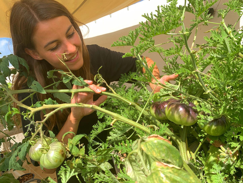 גידול עגבניות בבית