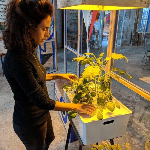 דיגול צמחים במערכת הידרופונית