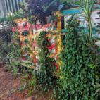 הכנת קיר ירוק ממשטח עץ