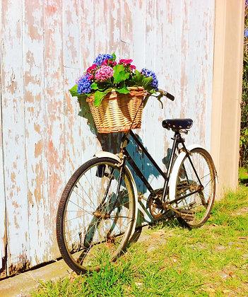Vintage Bike with Basket - Betty