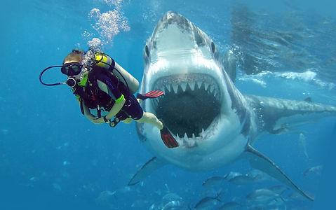 Sharkbite-1024x642.jpg