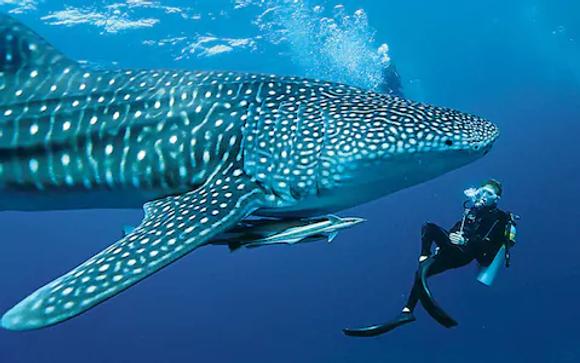 maldivespillowtalk_3259740a.webp