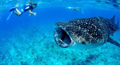 Maldives-for-Whale-Shark-Watching-850x45