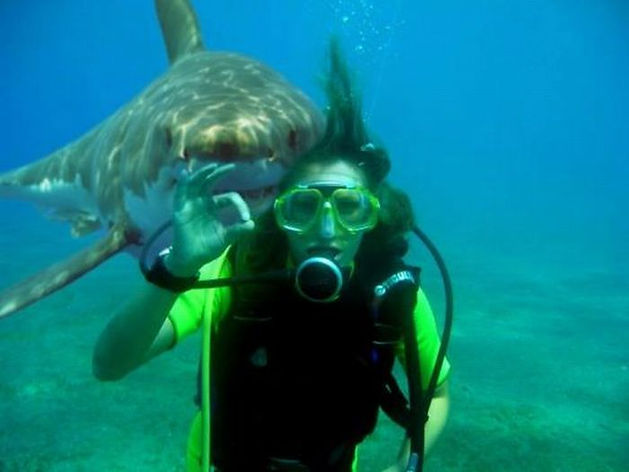 shark-diver.jpg