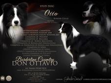 Otto collage.jpg