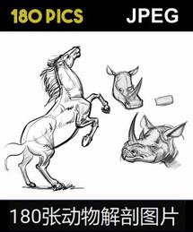 180 ANIMAL ANATOMY PICS