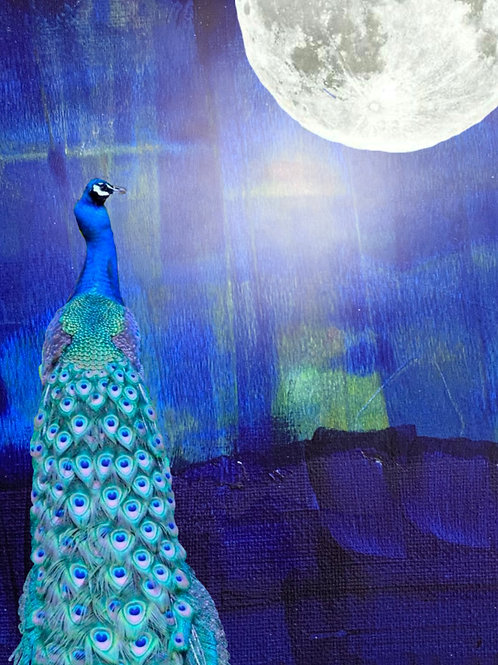 Peacock by the Moon