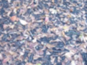autumnleaves_edited_edited.jpg