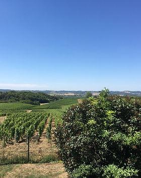 vigne chenay.JPG