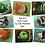 Thumbnail: 8 Fish Note Cards by Joan Roberts (Set #1)