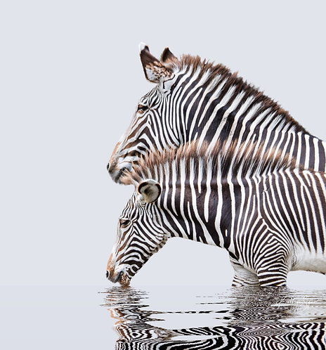 Zebra Mom and Baby by Kathryn Seguin