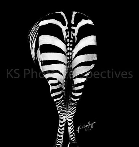 Zebra Going! By Kathryn Seguin Photography