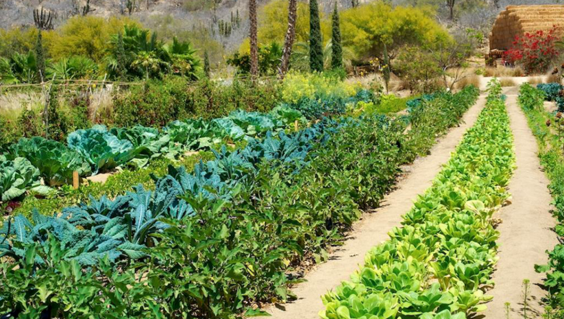FLO-crops.png