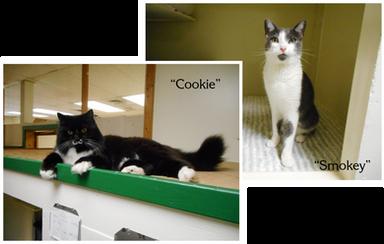Cookie & Smokey