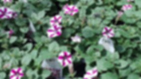 Wholesale Retail Plants and Produce | Dickinson Farm & Greenhouse