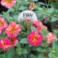 Wholesale Retail Flowers | Dickinson Farm & Greenhouse