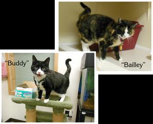 Buddy & Bailey