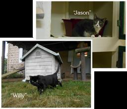 Jason & Willy