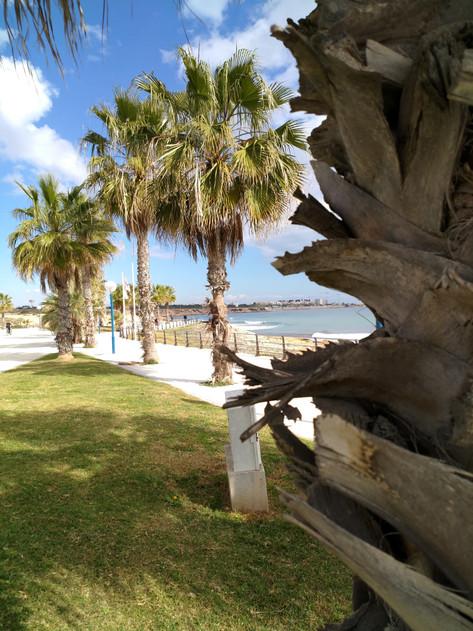 Playa Flamenca