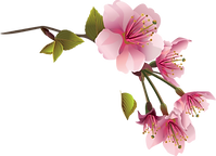kisspng-flower-spring-magnolia-clip-art-