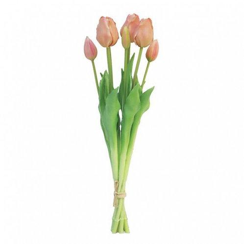 Tulips Peach