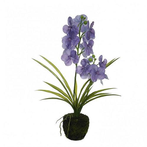 Orchidee June