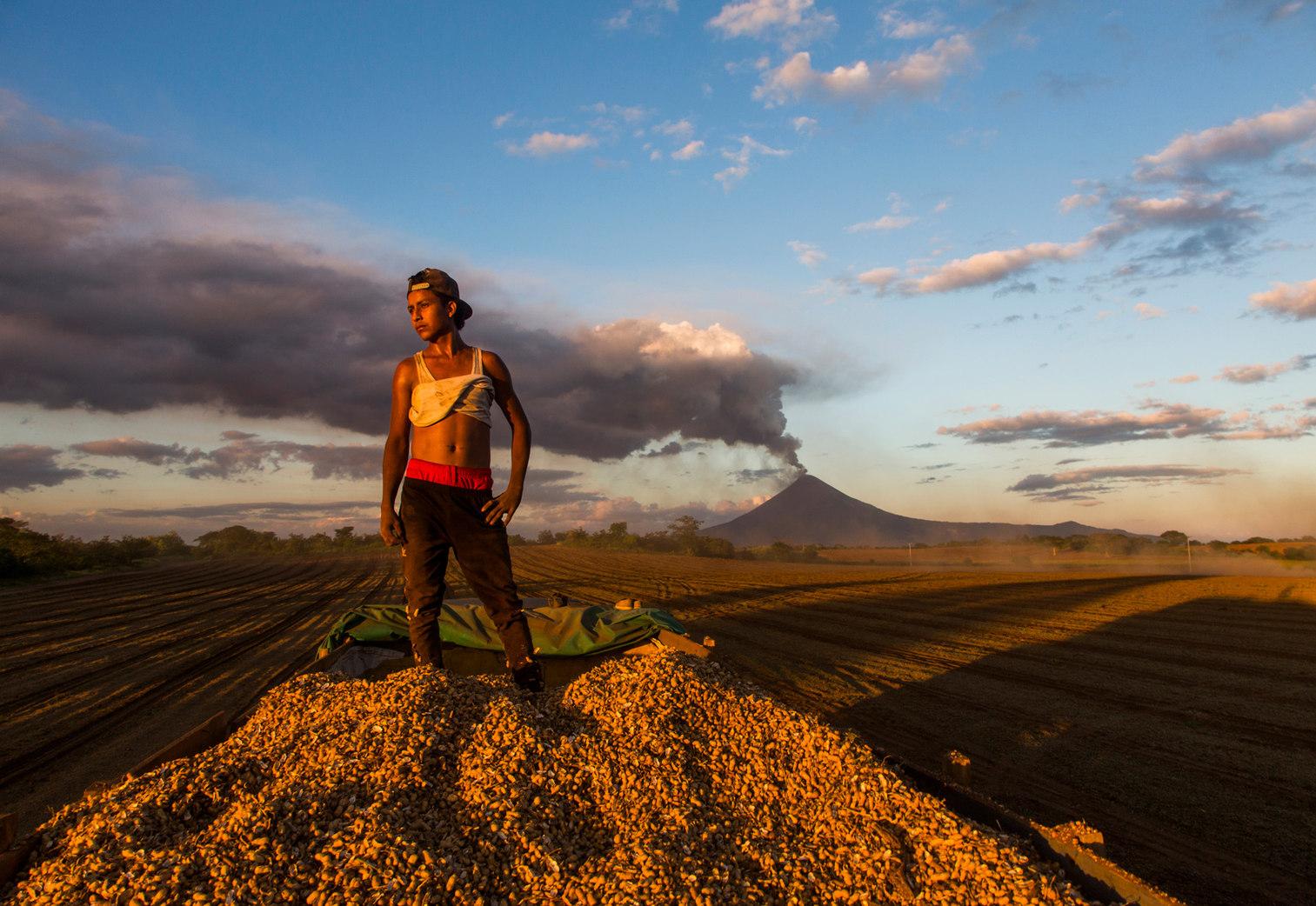 Peanut harvest. Nicaragua