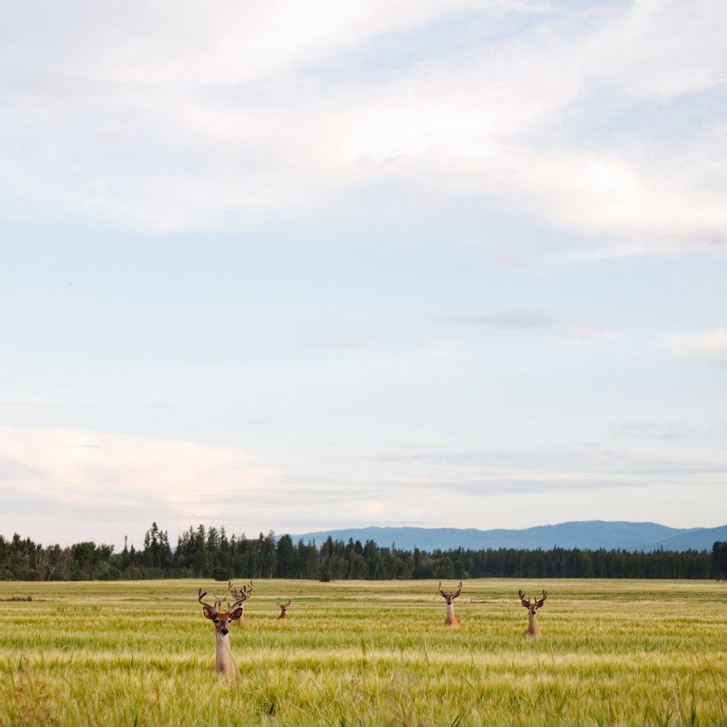 Flathead Valley, Montana